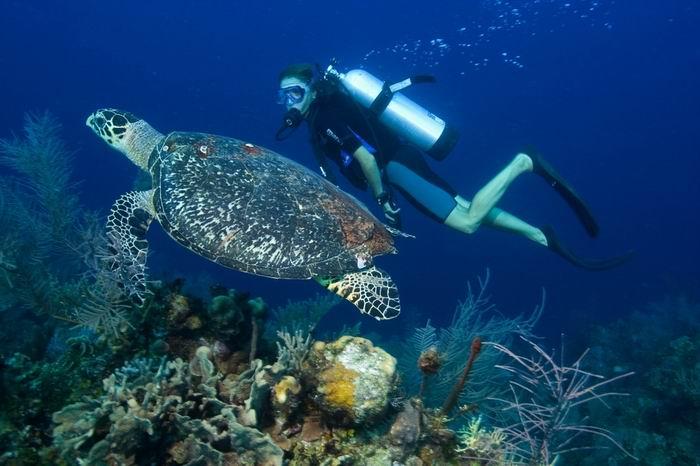 Nha Trang Scuba Diving 1 Day tour